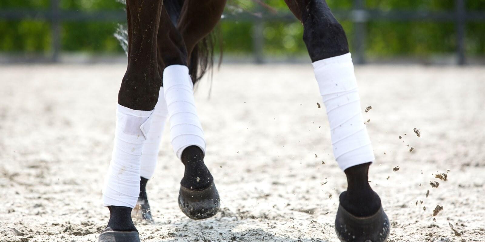 Welkom bij Equestrian Legal Advocaten
